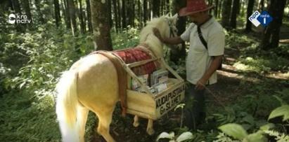 paardenbibliotheek