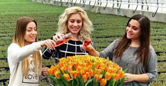 tulipa_og3ne